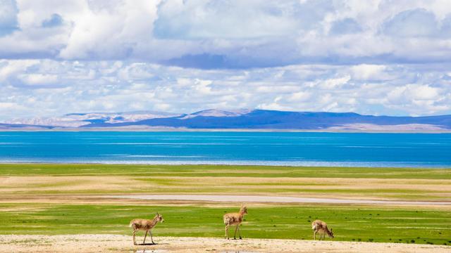国庆旅游西藏色林措清新自然风光插图4