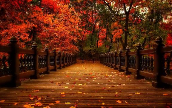 清新迷人的初秋风景图片插图7