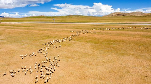 国庆旅游西藏色林措清新自然风光插图