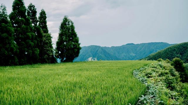 云和梯田绿色护眼风景写真插图4
