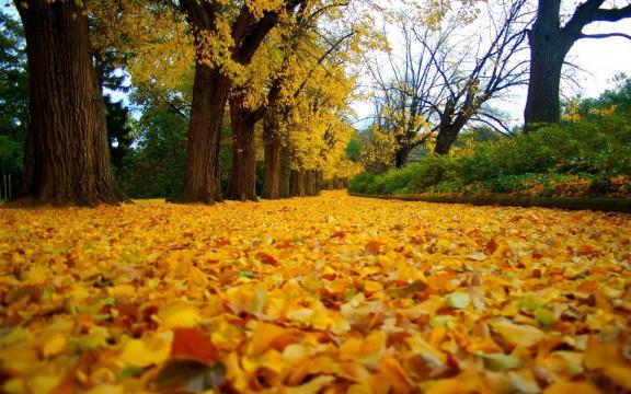 清新迷人的初秋风景图片插图6