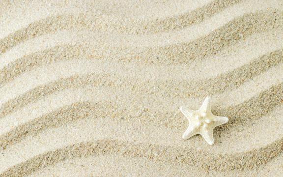 大自然的海星优美摄影图片插图1