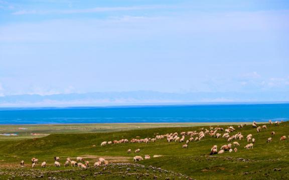 最美丽的青海湖风景插图4