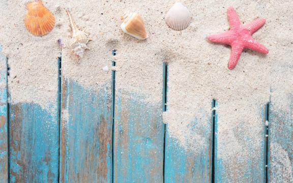 大自然的海星优美摄影图片插图3