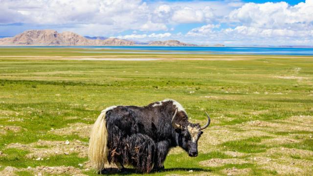 国庆旅游西藏色林措清新自然风光插图3