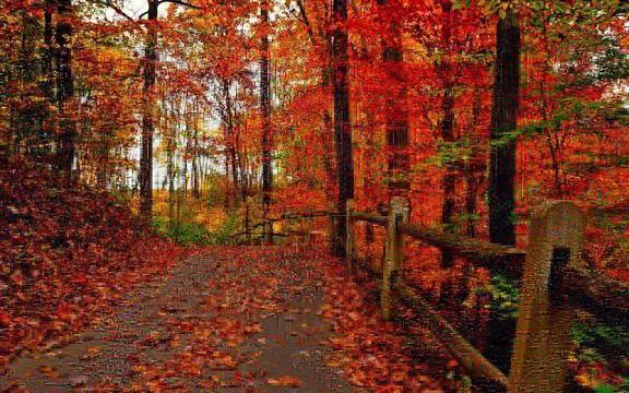 清新迷人的初秋风景图片插图5