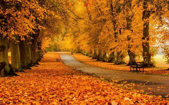 清新迷人的初秋风景图片插图2