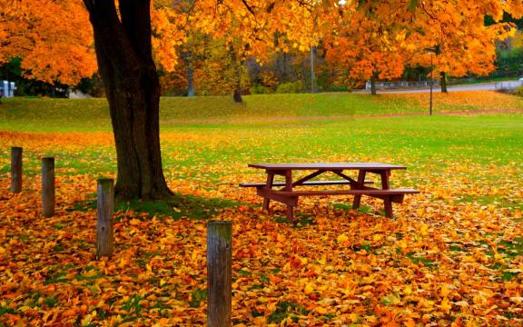 清新迷人的初秋风景图片插图1