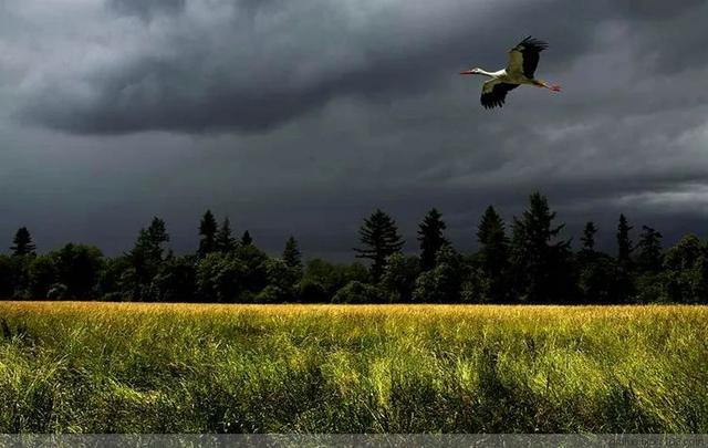 世界级绝色自然风光照片插图19