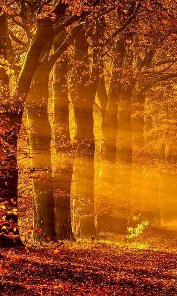 震撼!70张世界级绝色自然风光照片传来插图26