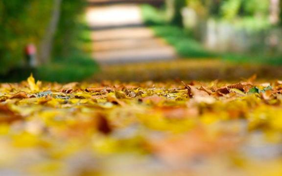 清新迷人的初秋风景图片插图4