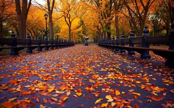 清新迷人的初秋风景图片插图8