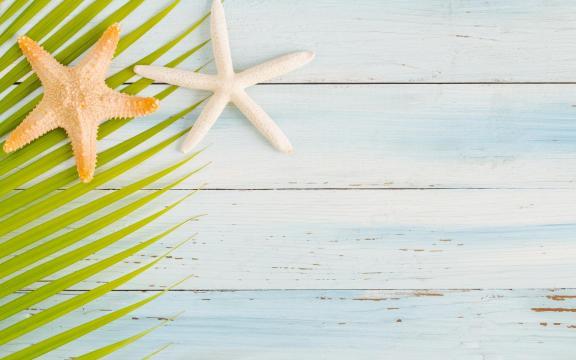 大自然的海星优美摄影图片插图5