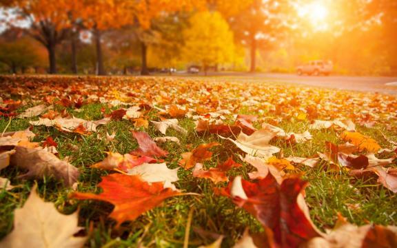 清新迷人的初秋风景图片插图
