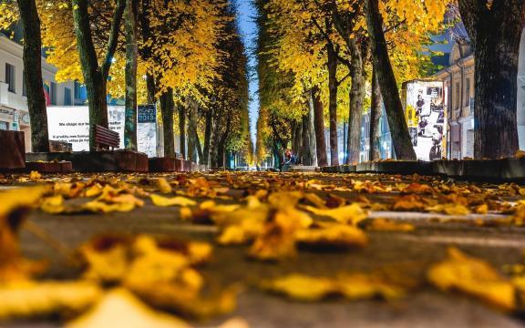 清新迷人的初秋风景图片插图3
