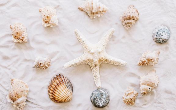 大自然的海星优美摄影图片插图7