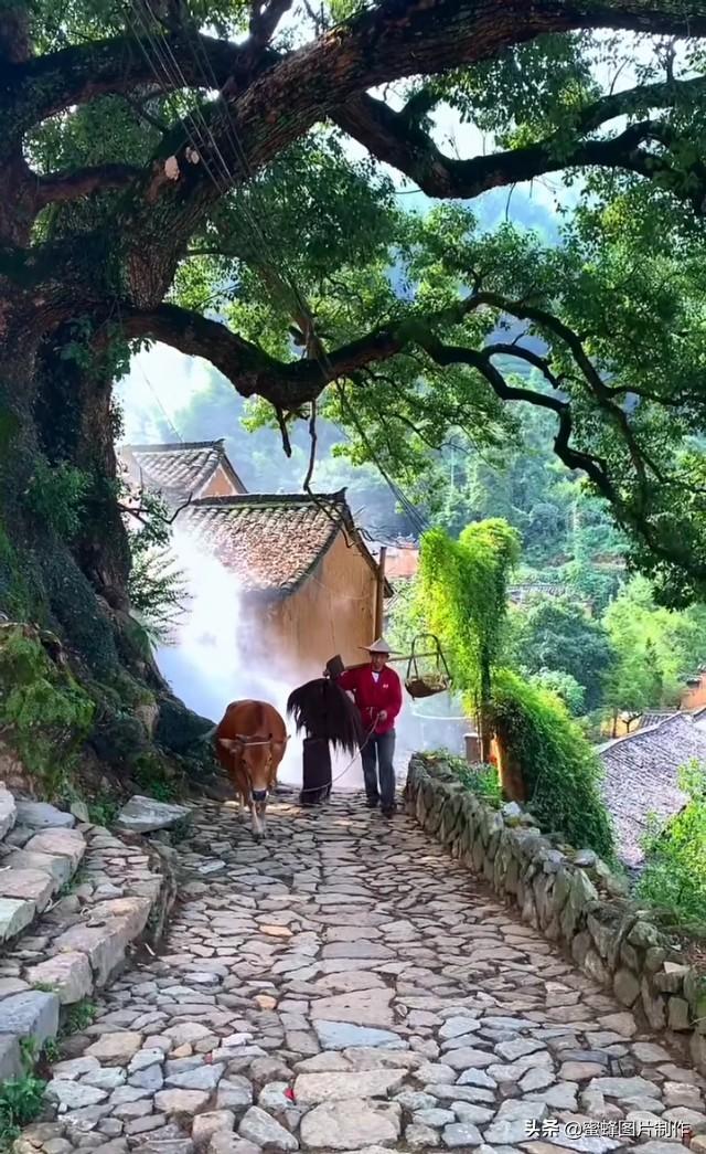 乡村生活真实风景头像壁纸插图